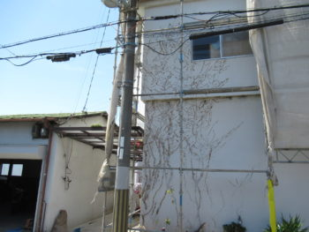 大工出張サービス 外壁の蔦(植物)の撤去 和泉市K様邸